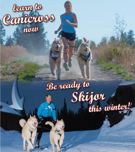 Learn to canicross now & skijor this winter